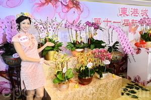 天暖年花早開 蘭花最貴1.6萬一株