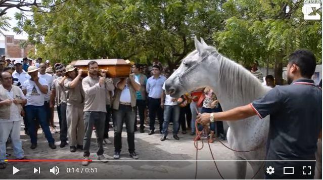 心碎一幕:白馬在主人葬禮上抵棺哀鳴