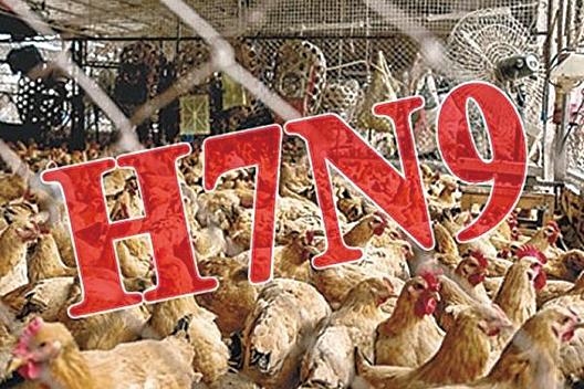 禽流感捲土重來?內陸現H7N9感染病例