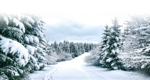 【浮生行吟】冬來雪漸遠