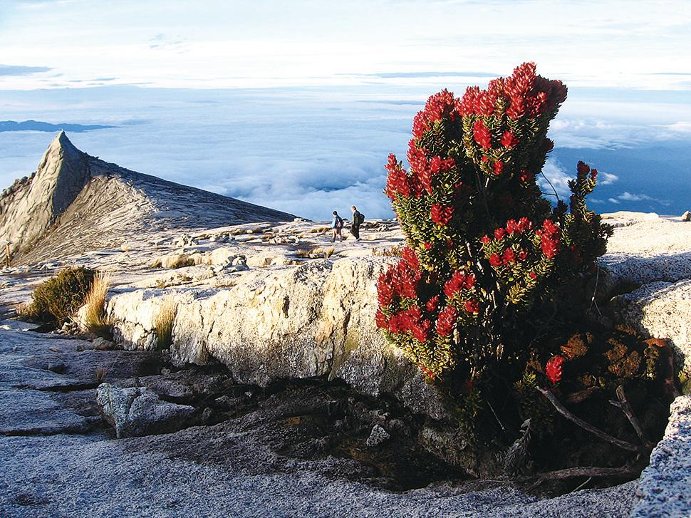 神山頂峰的高原植被。(維基百科)