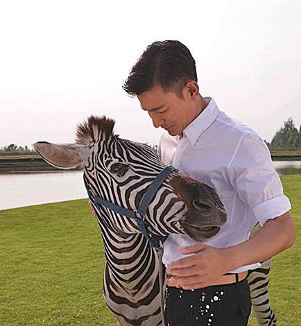 劉德華2013年為拍攝電視廣告與斑馬合影。(網路圖片