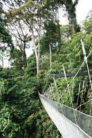 婆羅洲——懸空步道觀生態