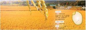 韓國天然玄米胚芽 人類食療佳品