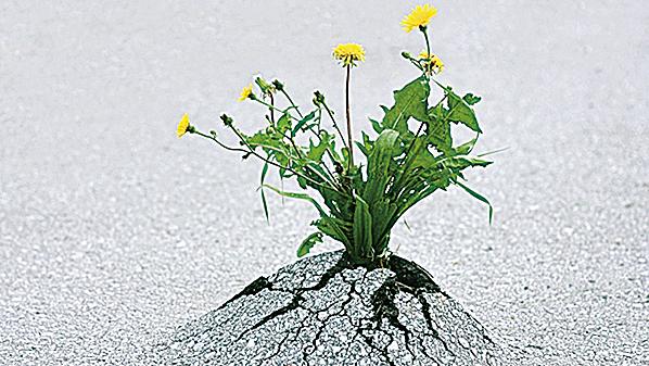 研究顯示,城市化一直改變動植物的特性。(視頻截圖)