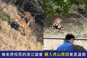 被老虎咬死的浙江遊客 翻入虎山原因竟是這個