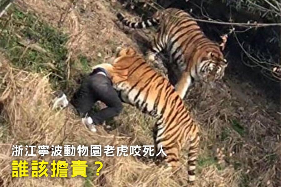 1月29日,浙江寧波雅戈爾動物園發生老虎咬死人事件。事件誰該擔責,為外界關注。(網絡圖片)