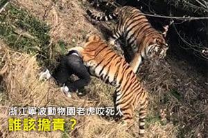 浙江寧波動物園老虎咬死人 誰該擔責?