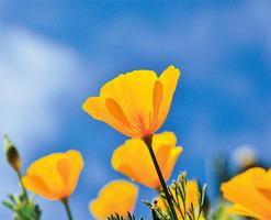 德州的野花季節