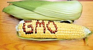 中共高官特供沒有轉基因食品