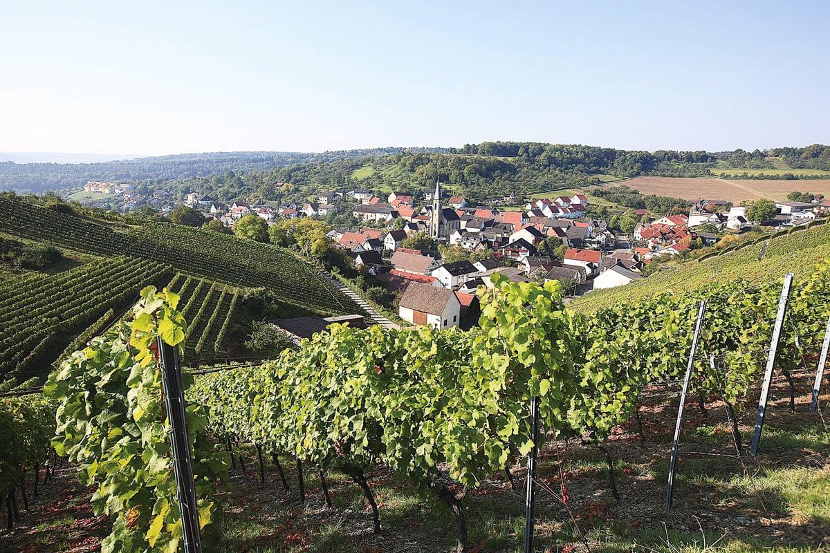 羅滕堡滿山遍野的葡萄園。(維基百科)