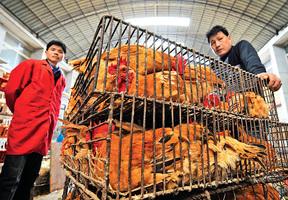 大陸恐爆發禽流感