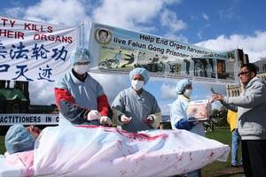 大陸器官移植是「活摘屠宰場」
