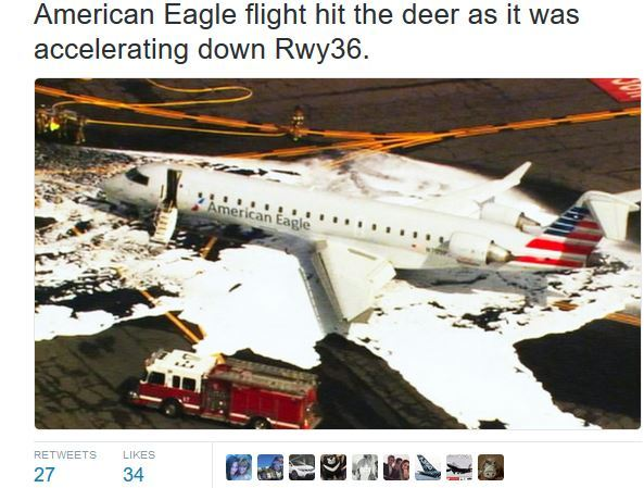 美國一航班起飛時撞上一頭鹿 緊急迫降