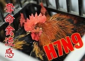 廣東發現H7N9病毒突變