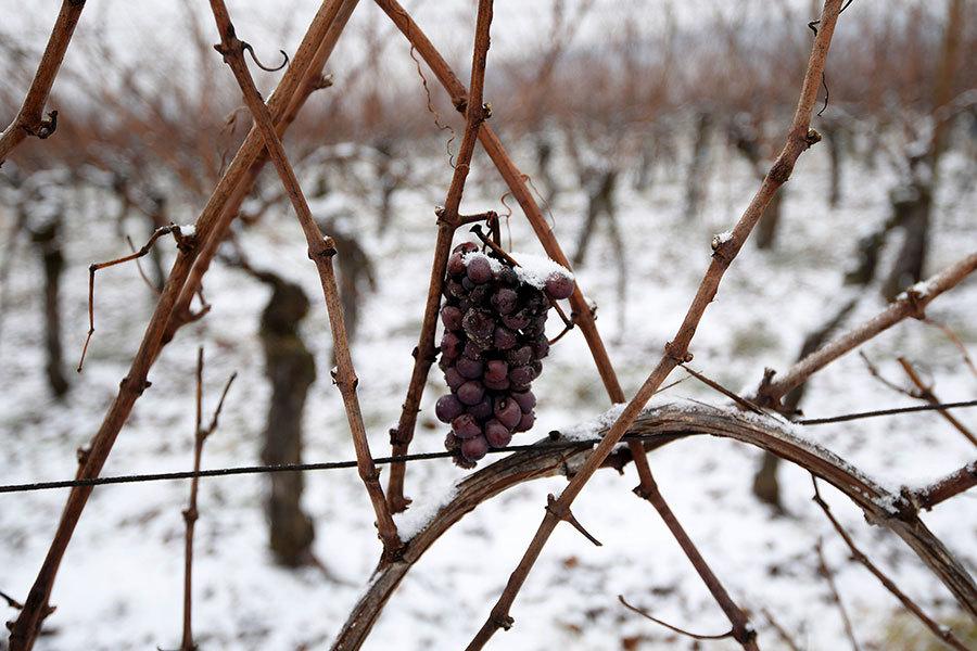 《法國葡萄酒雜誌》(La Revue du Vin de France)報道說,在過去的一年,國際盛產葡萄酒的地區均受暴風雨天氣的影響,特別是法國和拉丁美洲。(PATRICK HERTZOG/AFP/Getty Images)