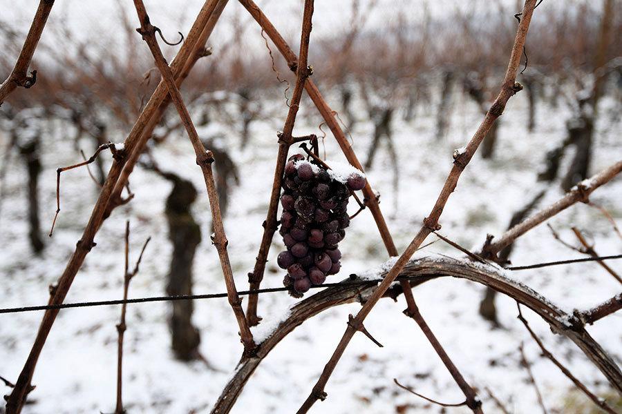 天氣惡劣 全球葡萄酒產量創廿年新低