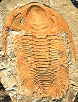 2.5億年化石 顯示物種大爆發