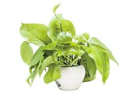研究 植物能刪除無用記憶 以保存能量