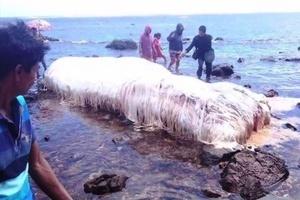 菲律賓地震前後 海灘頻現奇異生物