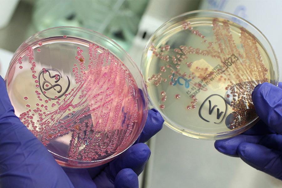 世界衛生組織2月27日發佈對人類最危險的12種細菌清單。(Sean Gallup/Getty Images)