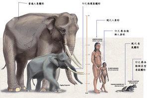 從考古發現看人類歷史的真貌【二】 小人種的發現(上)