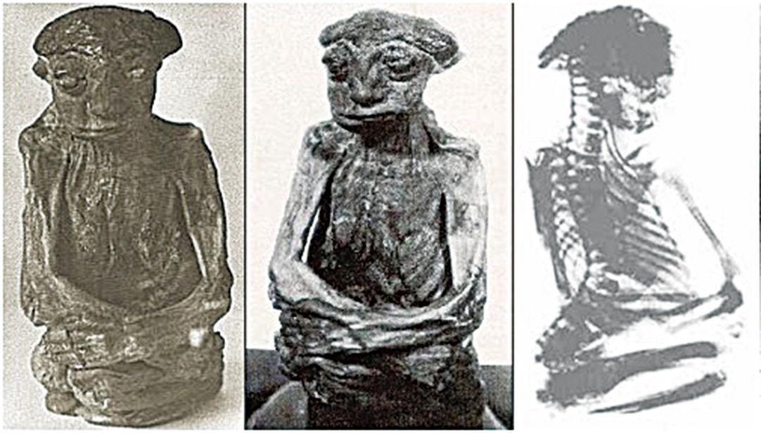 美國發現的呈坐式的小人乾屍「派卓」(Pedro)。(網絡圖片)