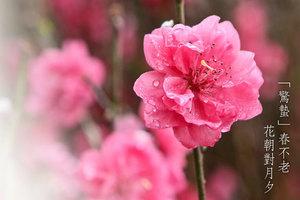 【節氣】「驚蟄」春不老 花朝對月夕