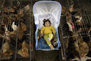 H7N9在中國突然擴散 美國疾控中心擔憂