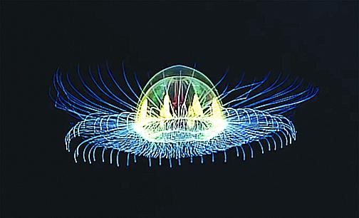 透明發光水母形狀像UFO,可透視其內臟。