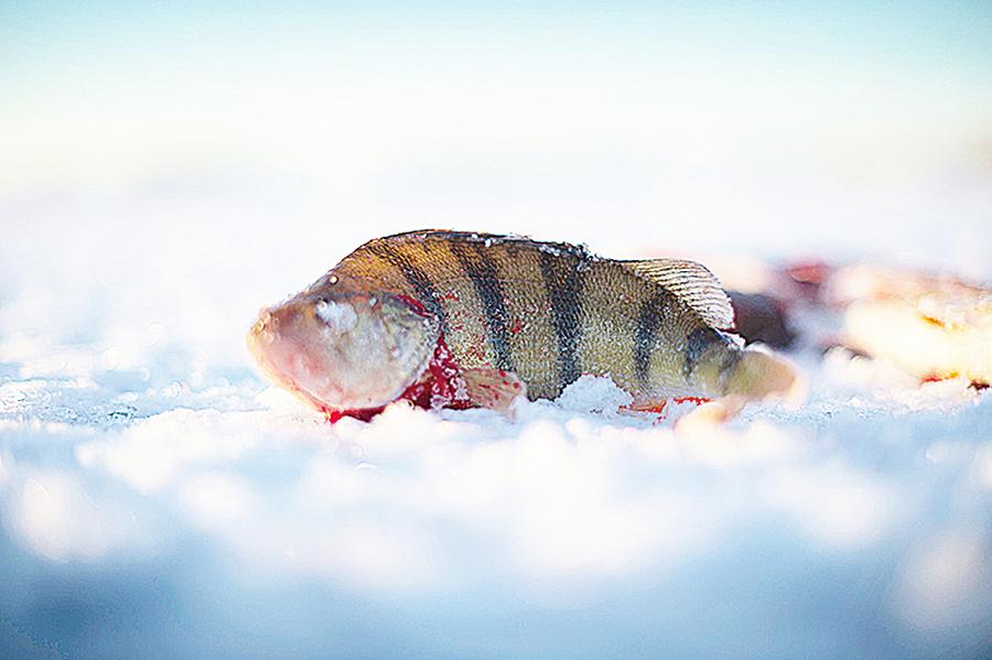 波羅的海污染嚴重 專家建議飲食多魚少肉