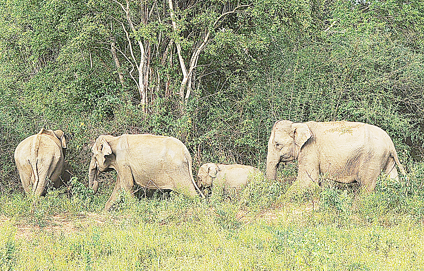 研究顯示,大象每天平均僅睡眠2小時。相比之下,人類需要8小時睡眠。(AFP)