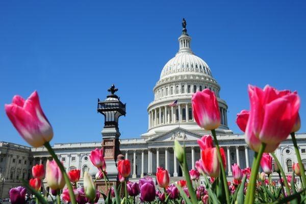 華盛頓美國國會大廈。(法新社)