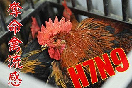 大陸H7N9禽流感疫情未得到有效控制,仍在蔓延。(網絡圖片)