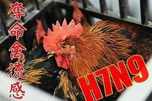 禽流感疫情蔓延 廣東新增三病例二人死亡