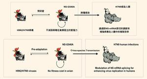 港大:H7N9基因突變 致病毒容易感染人類