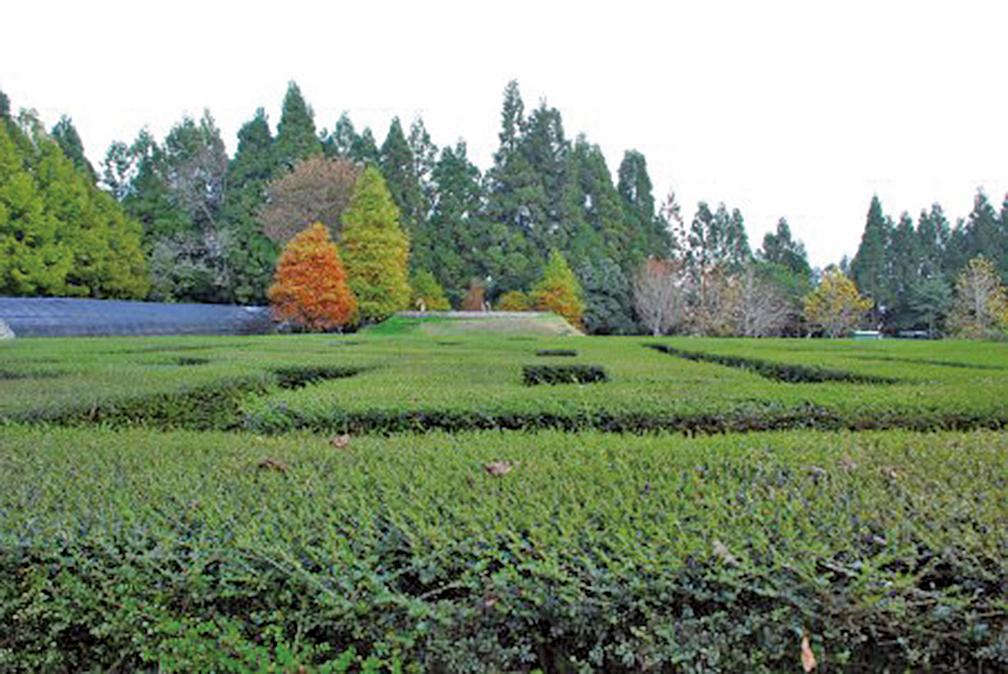 植物栽成的迷宮(攝影:王金丁)