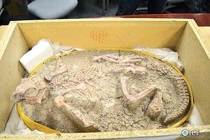 走私恐龍化石到美 大陸人被罰款