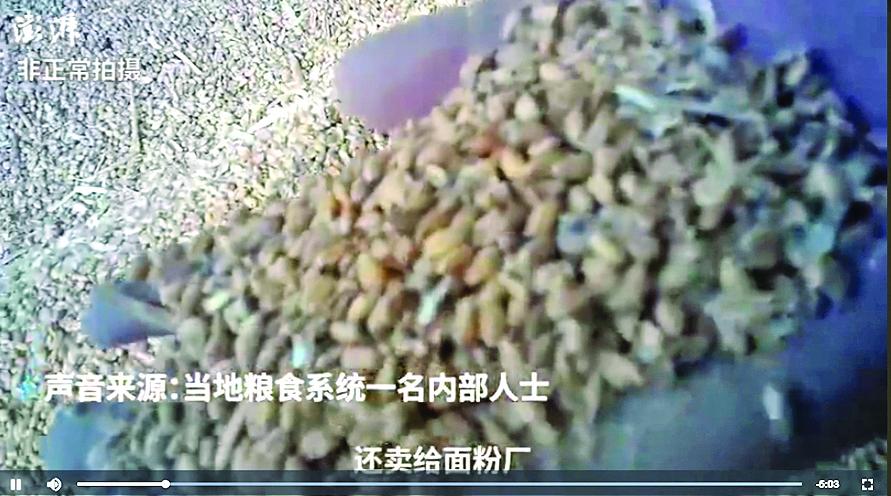 中儲糧變質小麥銷往麵粉廠