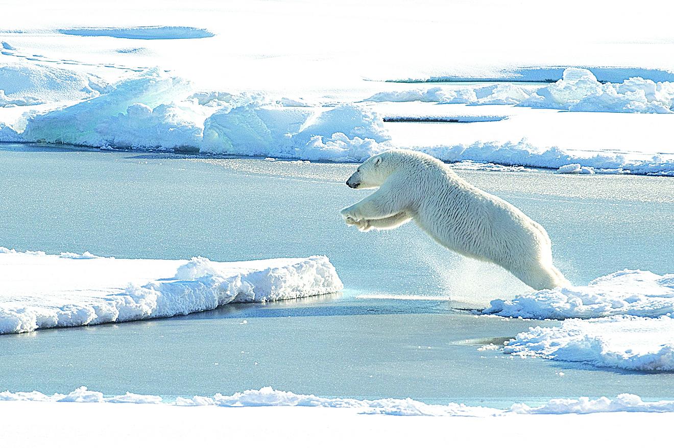 北極海冰融化,威脅北極熊的生存。(AFP)