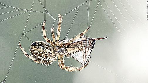 捕食動物排行蜘蛛獨佔鰲頭