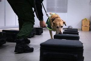 偵測炸彈或恐怖份子 狗狗及機器誰厲害?