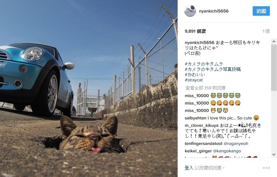 Instagram網站用戶「nyankichi5656」拍攝日本流浪貓在鑽地洞,玩得很開心。(Instagram網頁擷圖)