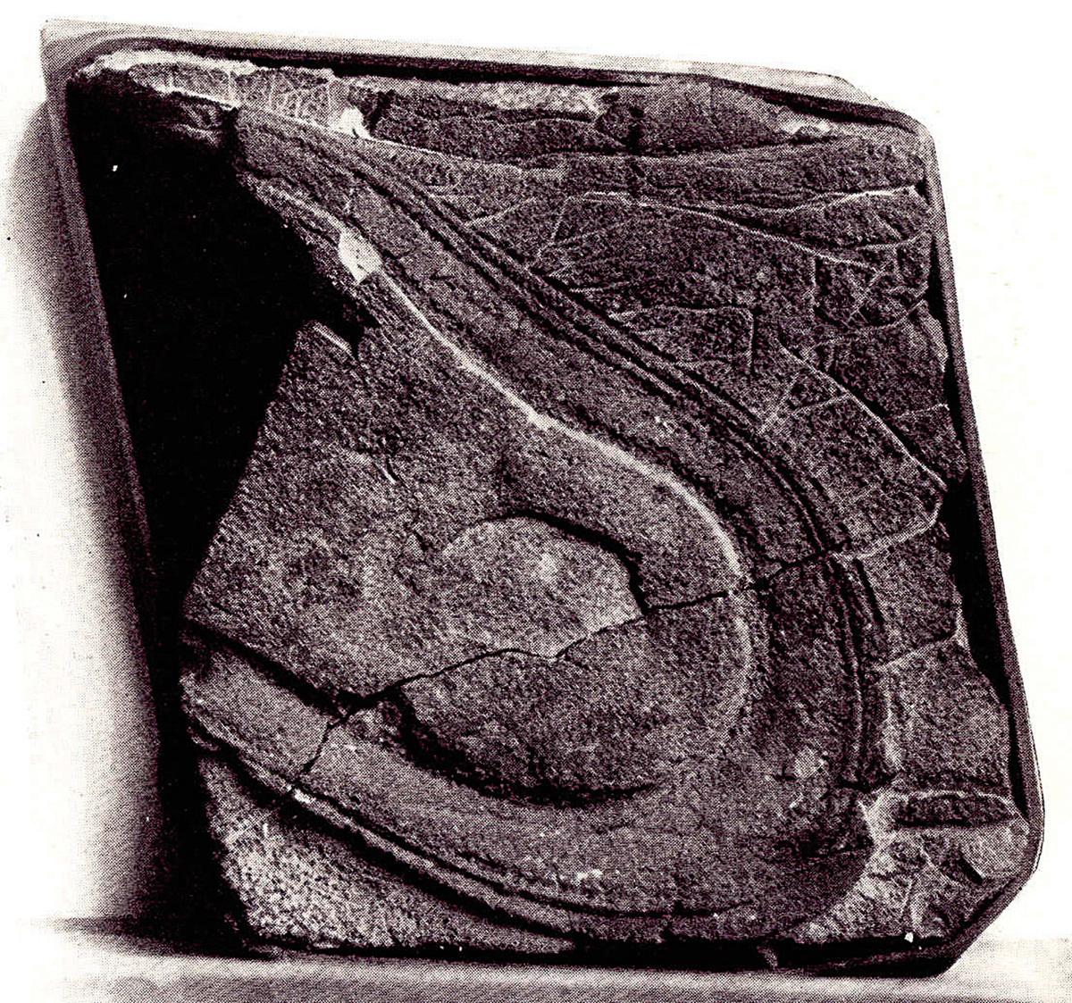 美國內華達州的Fisher峽谷內發現的鞋印化石。(網絡圖片)