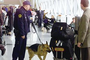 偵測炸彈或恐怖份子 狗與機器誰厲害?