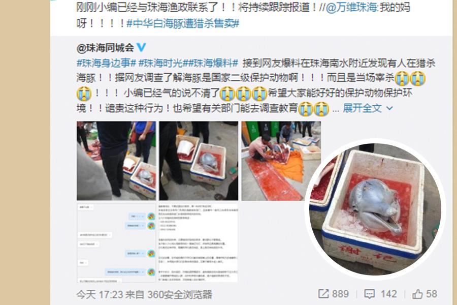 有網民在微博曝光,廣東珠海有人獵殺海豚,並當街宰殺,引發網民憤怒。(網絡圖片)