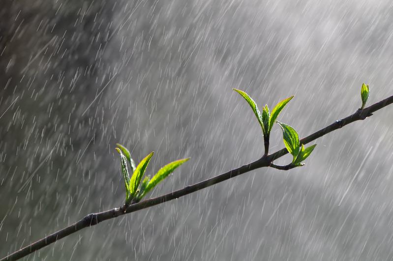 一到清明,天氣回暖,氣候濕潤,雨水增多,萬物復甦,大地一片生機勃勃。(Fotolia)