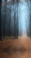 優美寧靜德國黑森林