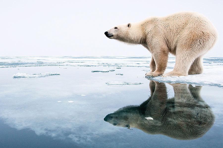 北極熊被列入國際瀕危物種名單