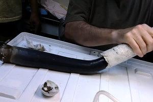 菲律賓發現身長米半巨蟲 形如外星生物